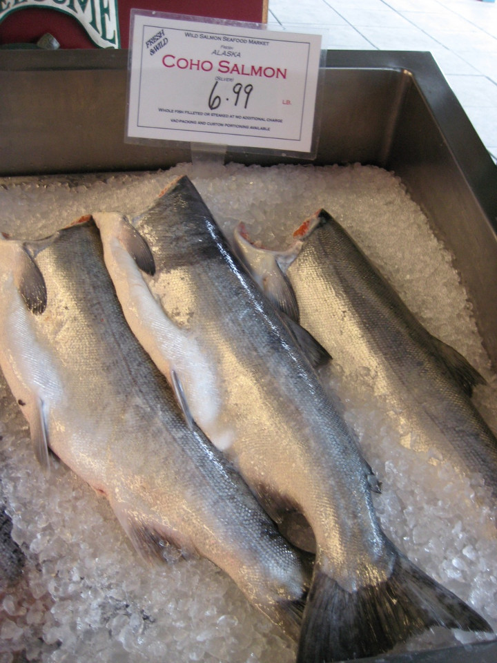 Coho Salmon On Display