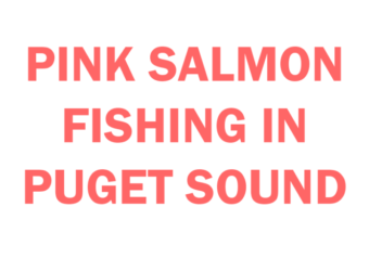 pink salmon fishing in Puget Sound Basics